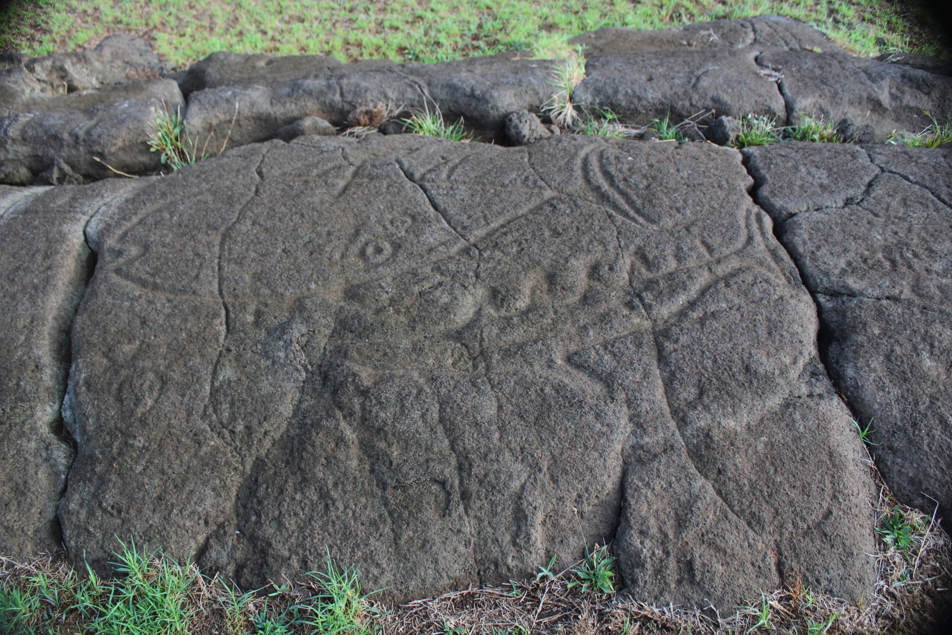 Papa Vaka: Tuna and Shark petroglyphs
